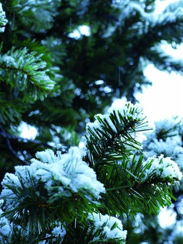 vánoční stromek zasněžený