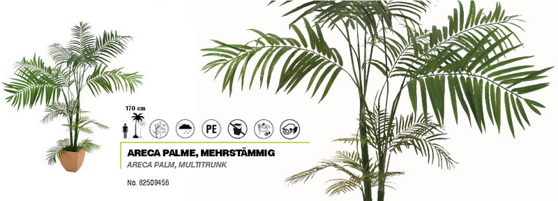 Areca palma vícekmenná, 170cm