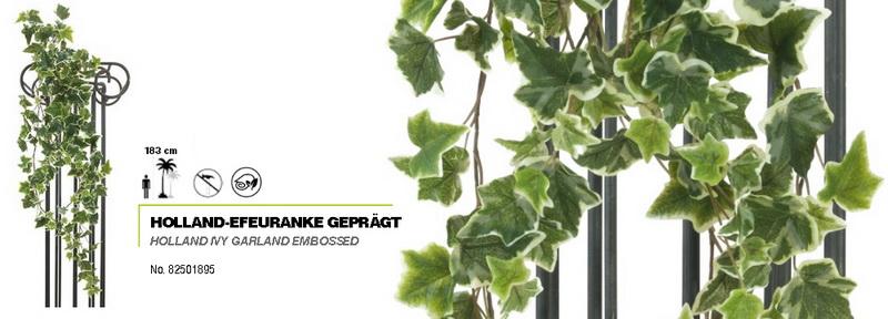 Holandský břečťan - listy s bílým okrajem, 183cm