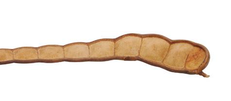Lusk fazole XXL, písková 80-100cm