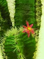 umělé kaktusy a sukulenty