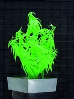 UV rostlina