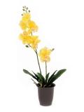 Orchidej žlutá v květináči, 57cm