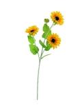 Slunečnice se třemi květy, 70 cm