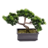 Borovice bonsai, 22cm