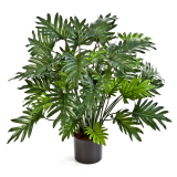 Palma Philodendron deluxe, 75cm