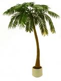 Palma v květináči, 1-kmenná, 300 cm