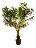 Palma fénix s květináčem 223 cm