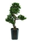 umělý bonsai