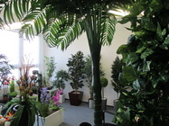 Showroom umelých rastlín StudioGreen